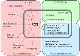 agronomy free full text heavy metals in crop plants transport