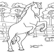 1000 images horse colouring pages horse