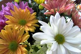 Pretty Plants by Caring For Easter Plants Westside News
