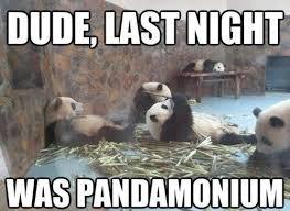 Funny Panda Memes - funny panda picture