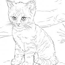 tag cute kitten pictures print color printable cute