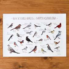 backyard birds of north carolina