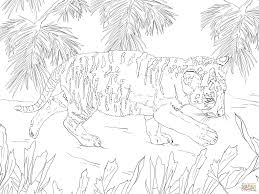 snow tiger cub coloring page free printable coloring pages