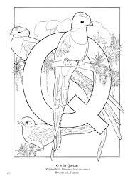 q is for quack coloring page tracing twisty noodle letter q and
