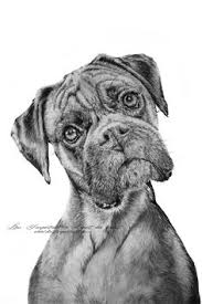 how to draw a dog boxer drawing u0026 art supplies pinterest