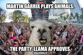 Edm Memes - ze party llama approves funny edm meme funny edm memes
