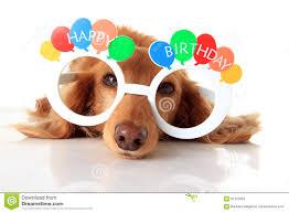 Happy Birthday Dog Meme - happy birthday dog stock image image of accessory dachshund 61372859