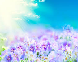 blue and purple flowers blue sky with bright purple flowers 50090 flowers photo flowers