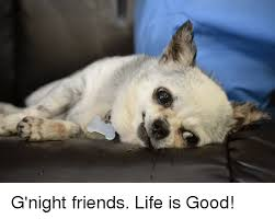 Life Is Good Meme - g night friends life is good meme on sizzle