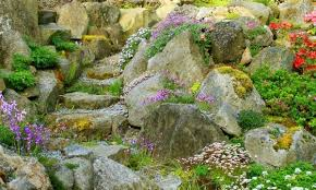 your guide to choosing rocks and plants for a rock garden smart tips