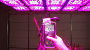 led lights for indoor plants why choose led grow lights for your indoor garden advantages of