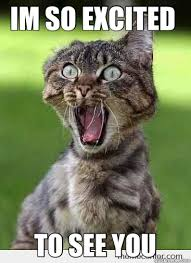 Im So Excited Meme - im so excited to see you excited cat hi quickmeme