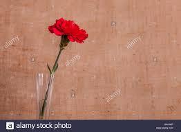 single stem vases single flower stem glass vase stock photos u0026 single flower stem