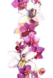 Flower Orchid White Orchid Clip Art Vector Images U0026 Illustrations Istock