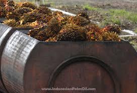 Minyak Cpo produksi minyak sawit mentah indonesia cpo untuk bulan juli tembus