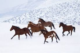 online get cheap posters horses in snow aliexpress com alibaba