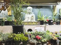 get to know fremont indoor sun shoppe u2013 blue owl workshop