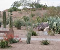 Desert Landscape Ideas by Desert Landscaping Ideas Photograph Filed In Desert Lands