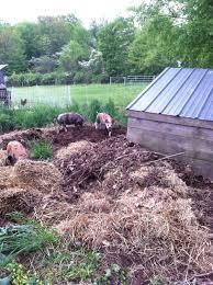 pigs training 2015 u2014 lilac hill farm