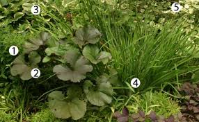Backyard Plants Ideas 10 Combinations For Shade Fine Gardening