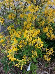 native plant nursery sunshine coast florida native plants tallahassee com community blogs