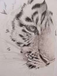 wildartcapture julia ruffles new tiger cub drawing