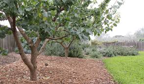 services orchard keepers orchard design restoration