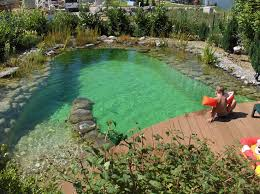 Backyard Swimming Ponds by 481 Best Pools And Spas Images On Pinterest Backyard Ideas