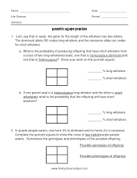 punnet square worksheets worksheets