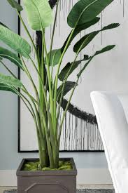 Great Indoor Trees Hgtv by Best 25 Potted Palm Trees Ideas On Pinterest Pool Plants