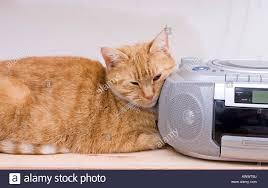 female ginger cat listening to the radio stock photo