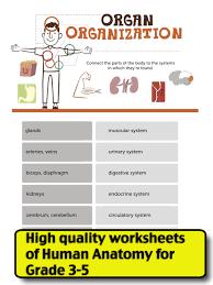 science human anatomy worksheets grade3 5 ipad reviews at ipad