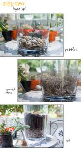 how to make a terrarium without swearing scarlet words