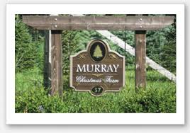 murray christmas tree farm