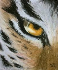 gallery tiger eye drawing pencil drawings gallery