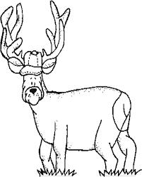 deer coloring color book
