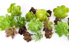 fake succulents set of 10 artificial succulents in green and