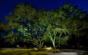 Landscape Tree Lights Services Moon Lighting Electrical