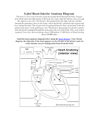 Cat Dissection Worksheet Inner Body Archives Page 55 Of 73 Human Anatomy Chart