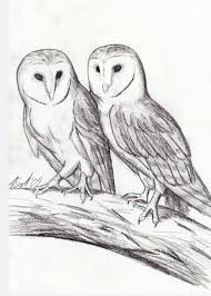 barn owl sketch by mostly harmful on deviantart