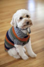 crochet pattern for dog coat a bright and bold fun striped dog coat free crochet pattern
