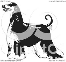 afghan hound tattoo clipart illustration of a long haired afghan hound dog standing