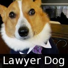Lawyer Dog Memes - the best of lawyer dog memes