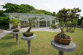 bonsai garden home ideas jenisemay com house magazine ideas