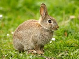How Do I Get Rid Of Rabbits In My Backyard Living In Harmony With Wild Rabbits Peta
