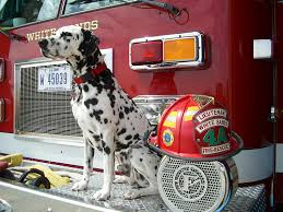 260dalmatianfirestation ashx