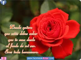 bonitas de rosas rojas con frases de amor imagenes de amor facebook postales románticas con rosas rojas amor pinterest rosas rojas