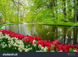 beautiful spring flowers near pond keukenhof stock photo 387497443