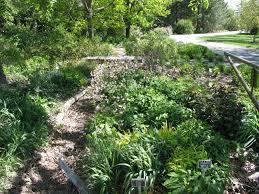 native texas plants for shade a native shade garden dyck arboretum