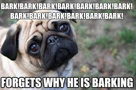 Dog Barking Meme - 10 of the best first world dog problems meme tilt barking f c